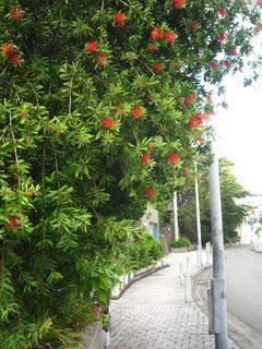 brushtree.jpg