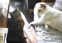 cat130209.jpg