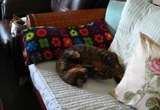 cats130621.jpg