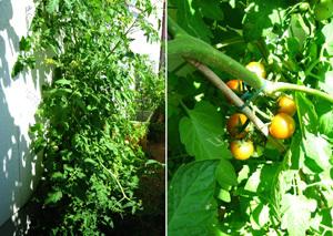 garden130720.jpg