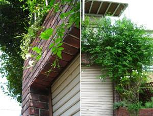 garden130720b.jpg