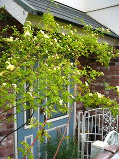 garden140418.jpg