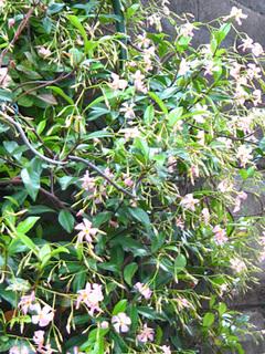 garden140530a.JPG
