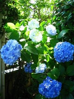 garden140621d.jpg